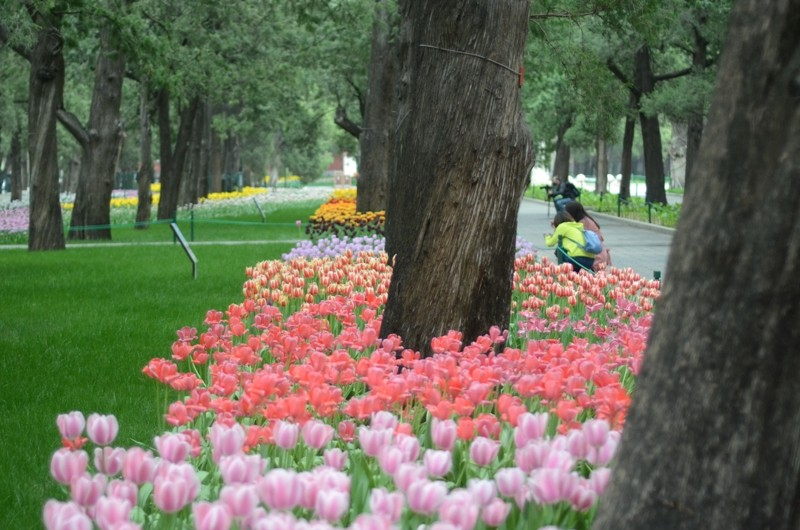 Tips-for-visiting-parks-and-sceneic-spots-in-Beijing-during-Coronavirus-Cultural-Keys-5