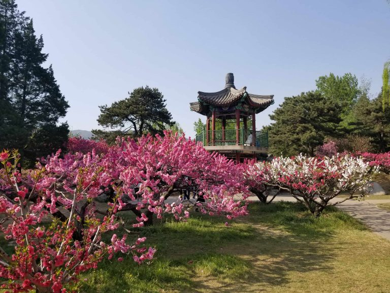 Beautiful Beijing: the best sights we saw this spring!